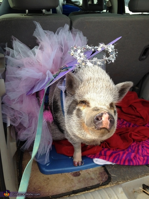 Striking a pose, Leroy the Angel Pig Costume
