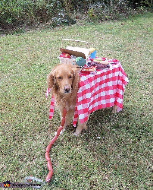 Life is a Picnic Homemade Costume for Dogs