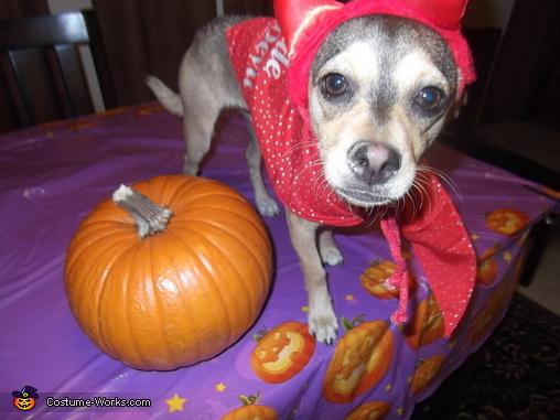 Lil Devil Costume