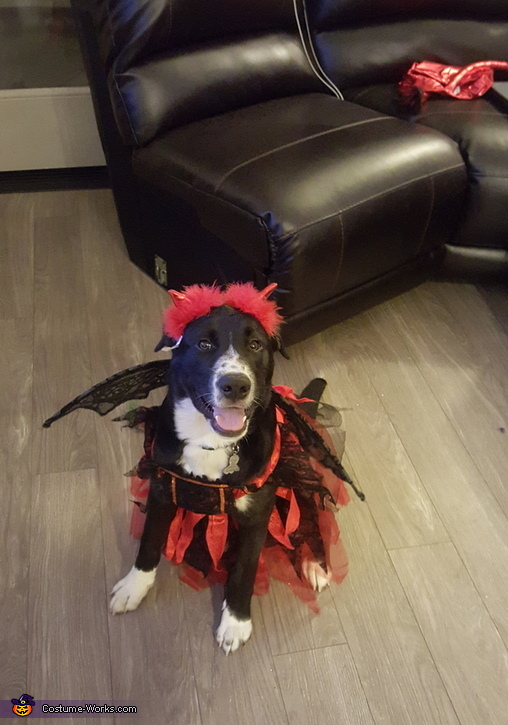 Lil Devil Puppy Costume