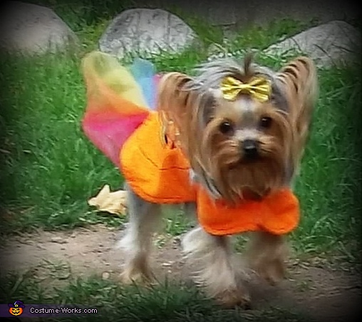Homemade Pumpkin Costume for Dogs