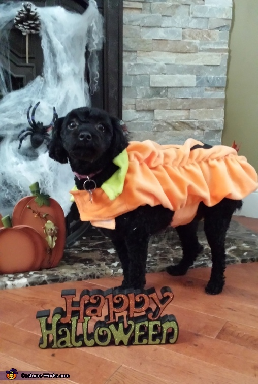 Lil Pumpkin Dog Costume