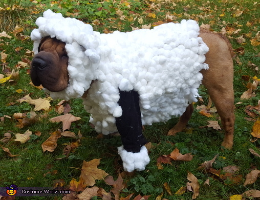 Lilly the Shar Pei Sheep Costume