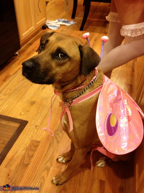 Lily as a Butterfly - Homemade costumes for pets