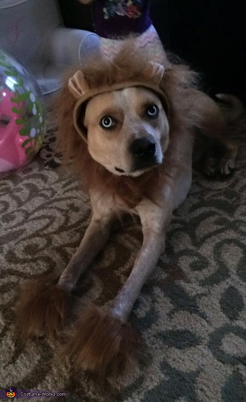Tie the Lion (side view), Lion Dog Costume