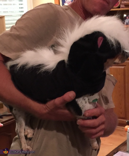 Jake the Skunk, Lion King Costume