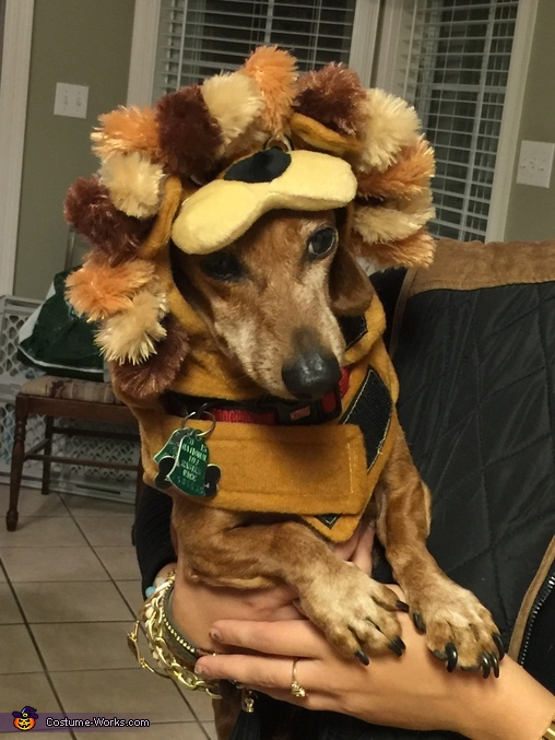 Lion King Costume