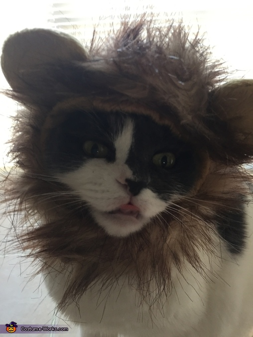 Lion Kitty Costume