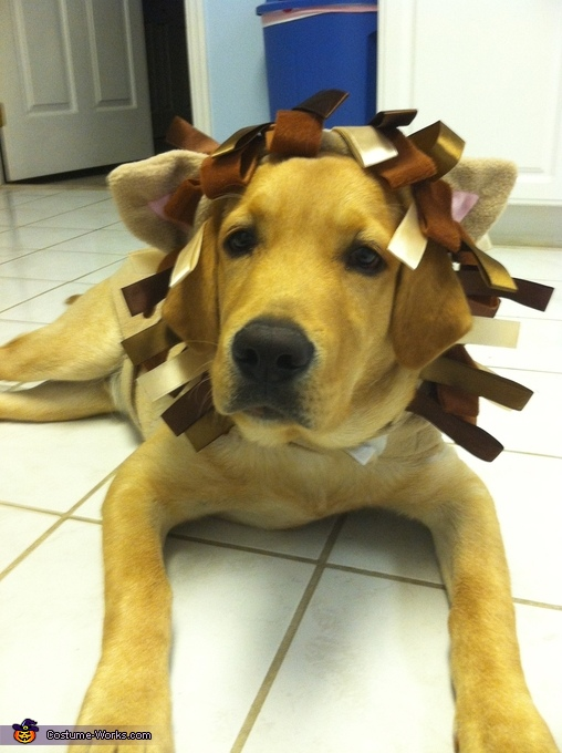 Lion Puppy Costume