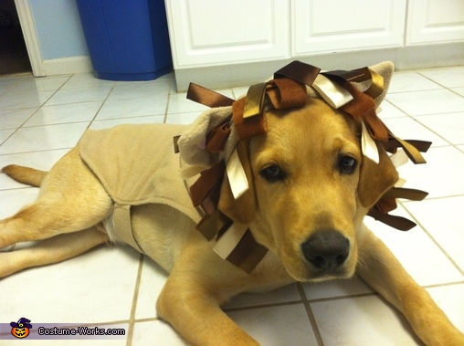 Calm before the storm, Lion Puppy Costume