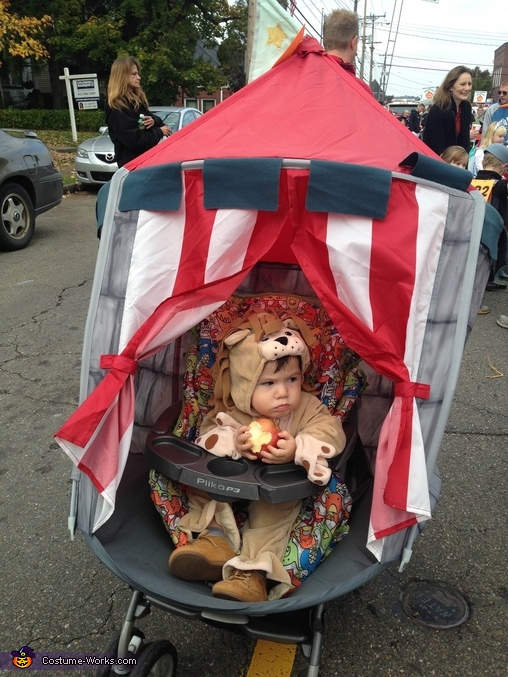 Lion stuck in the circus tent eating apple, Lion stuck in the Circus Tent Costume