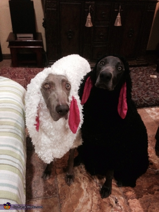 Little Black Sheep Dog Costume