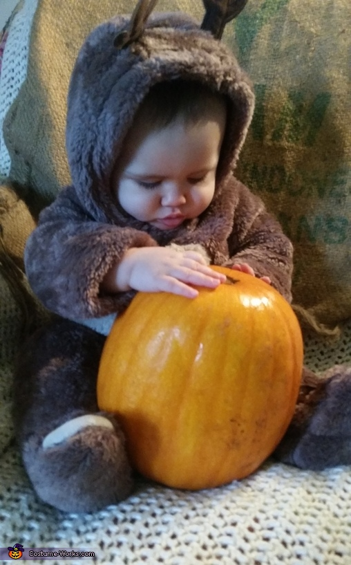 Tarek the buck checking out his pumpkin, Tarek the Little Buck Costume