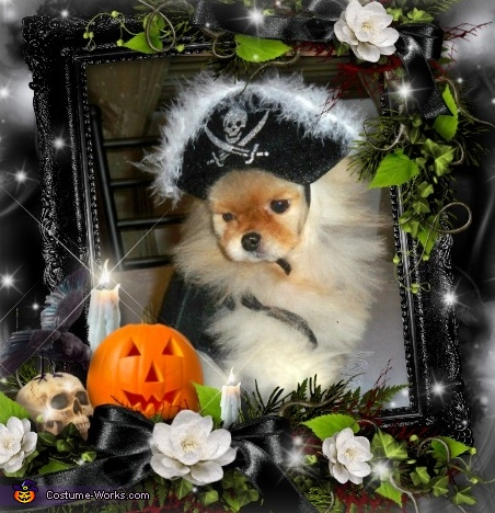 Pirate Pom, Little Devil Dog Costume