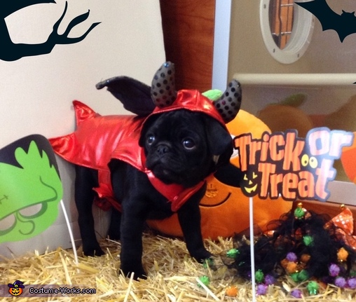 Little Devil Dogs Costume