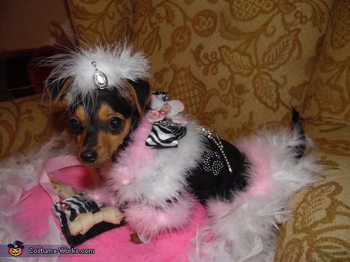 Little Diva Dog Costume