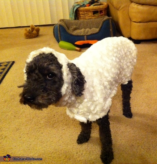 little lost sheep costume
