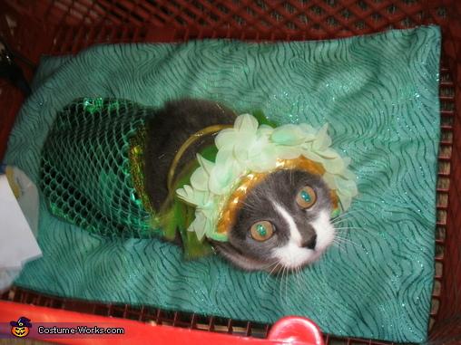 Little Mermaid Cat Homemade Costume