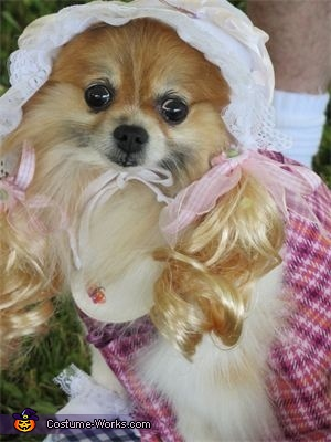 Coy Little Miss Muffet, Little Miss Muffet Dog Costume