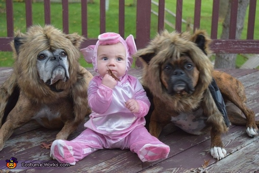 More of the ferocious Wolves with the helpless piggy, Little Pig and the not so Big Bad Wolves Costume