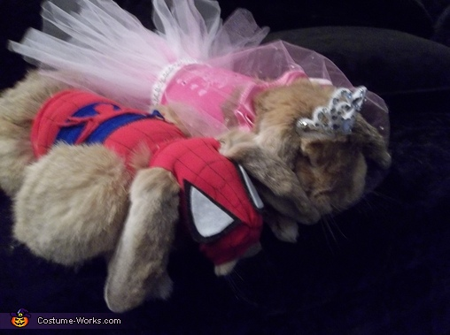 Little Princess and Spiderbunny Costume