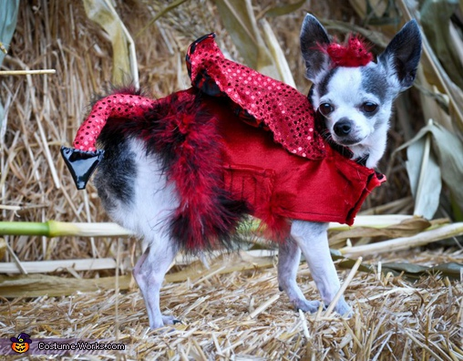 Little Devil - Homemade costumes for pets