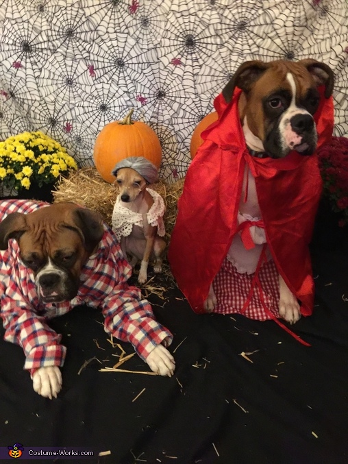 Little Red Riding Hood, Grandma and Big Bad Woof Costume
