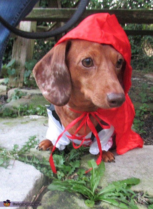Little Red Riding Hound preparing for another adventure!, Little Red Riding Hound Costume