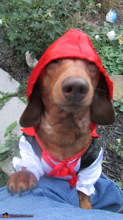 Little Red Riding is done with her costume and her adventure., Little Red Riding Hound Costume