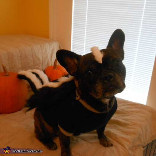 smile..., Little Stinker Dog Costume