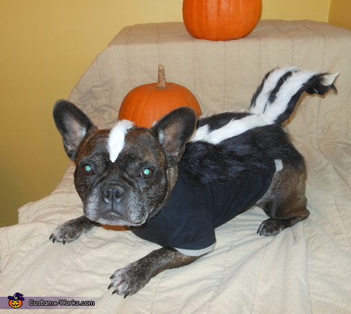 How To Make A Skunk Costume For Dogs
