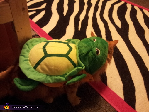 Little Turtle Homemade Costume