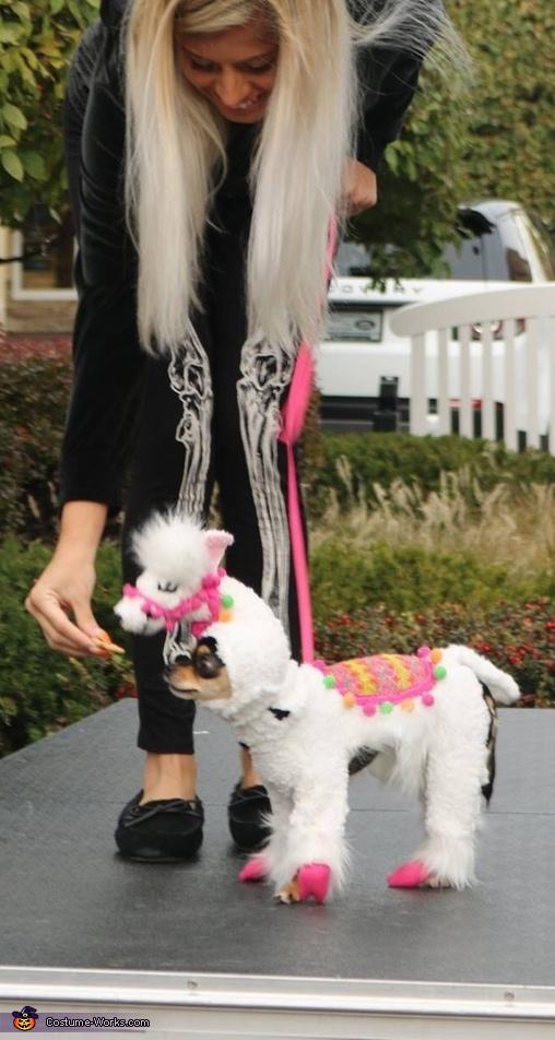 Llama Dog Costume