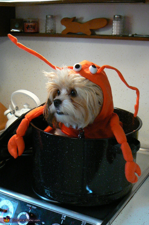 Lobster - Homemade costumes for pets