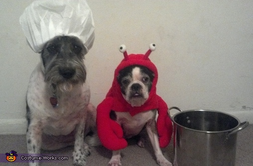 Lobster and Chef Dogs Costume