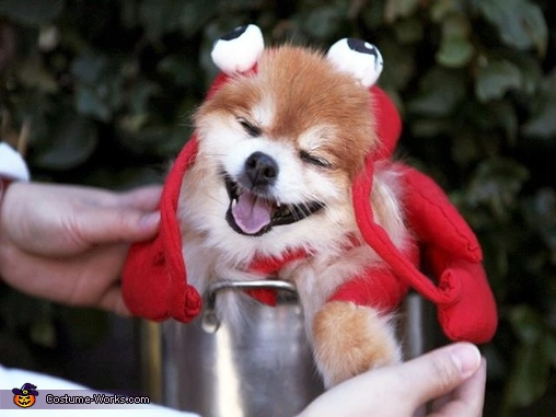 Happy is a happy lobster, Lobster Dog Costume