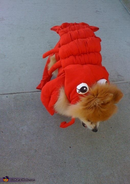 Happy crawling around, Lobster Dog Costume