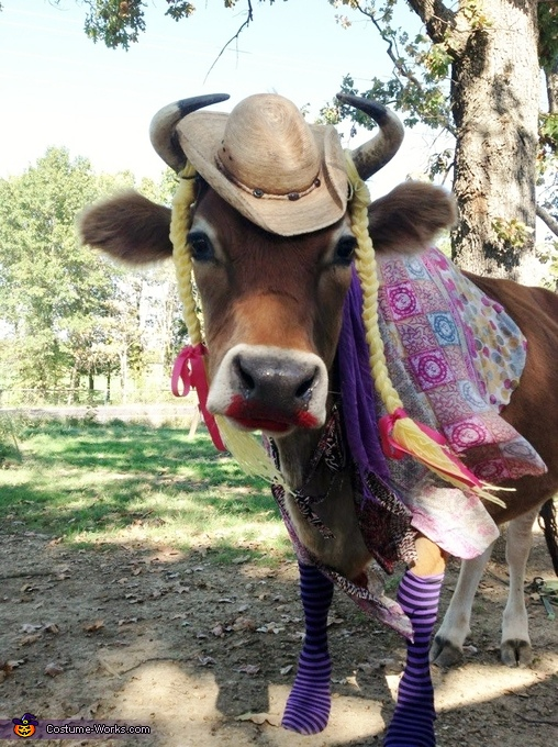 Steer dressed up like a Cowgirl! Costume