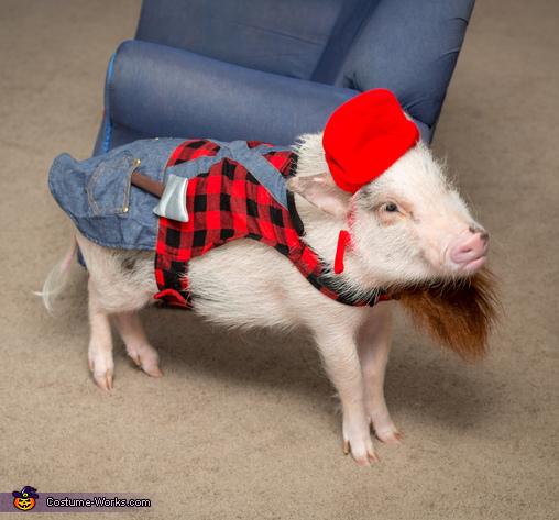 hamilton the pig cartoon