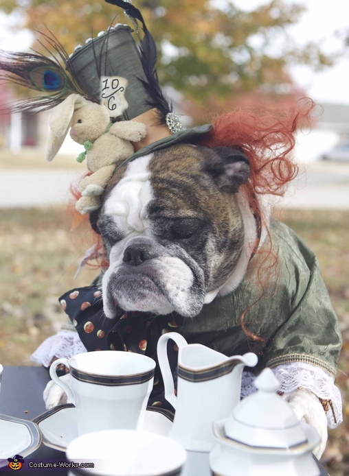 Zeelo enjoying his tea and friends at his tea party, Mad Hatter Dog Costume