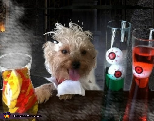 Mad Scientist Dog Costume