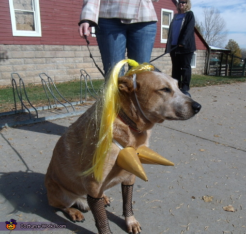 Madonna Costume Idea for Dogs