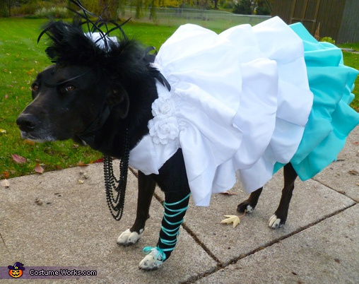 Hatsune Miku - Homemade costumes for pets