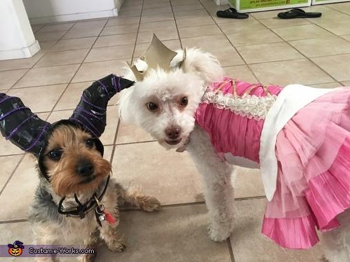 Maleficent & Sleeping Beauty Dogs Homemade Costume