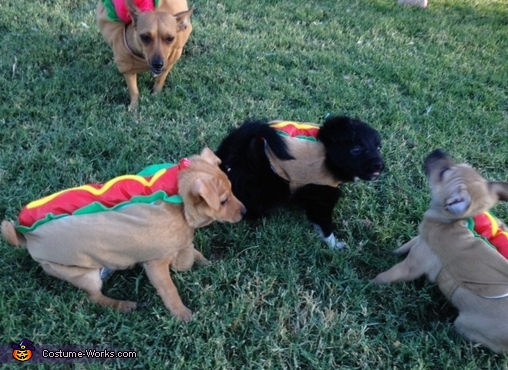 Mama doggy herding up the hotdogs , Mama Hotdog & Baby Hotdogs Costume