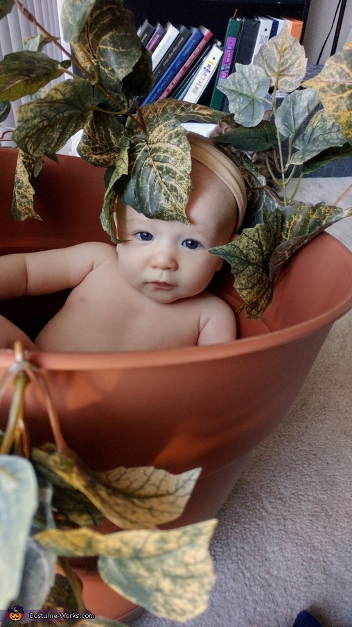 Mandrakes are most comfortable inside their pots, Mandrake Costume