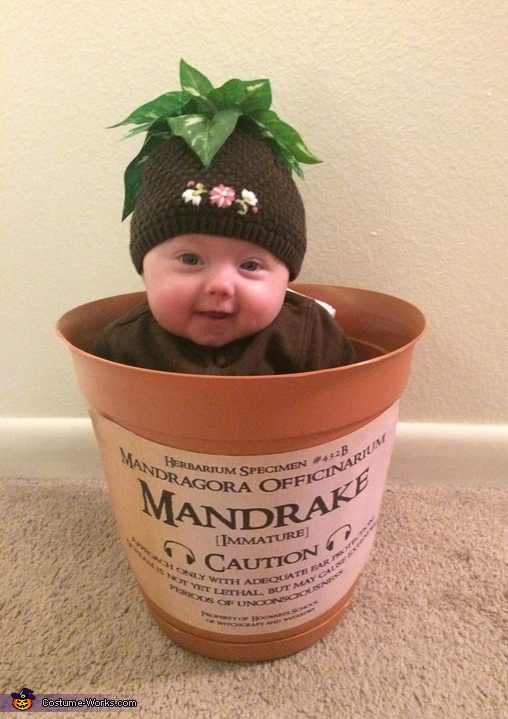 Mandrake Madness Homemade Costume