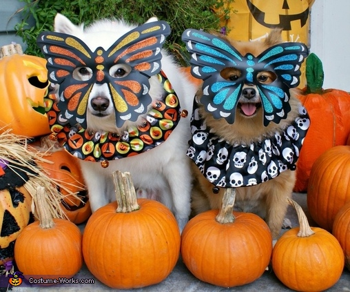 Mardi Gras Butterfly Dogs Costume
