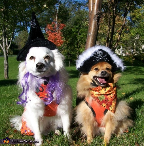 The Witch and The Pirate, Mardi Gras Butterfly Dogs Costume