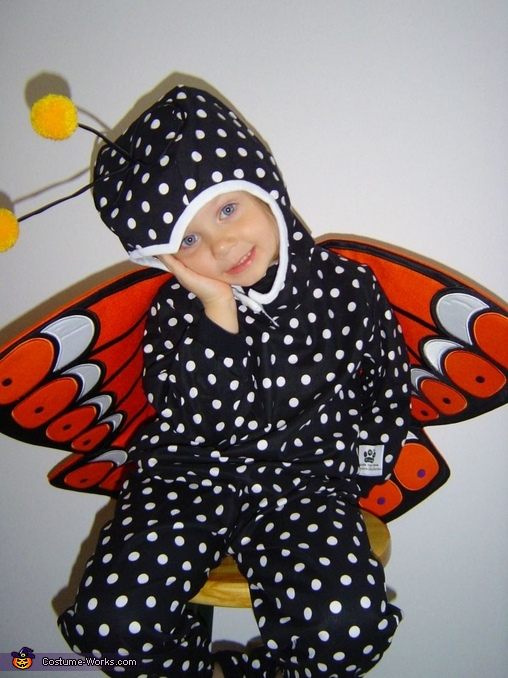 Beautiful Butterfly Girl, Mardi Gras Butterfly Dogs Costume